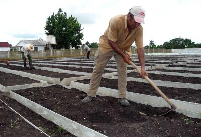 Incrementan semilleros tecnificados para producir tabaco
